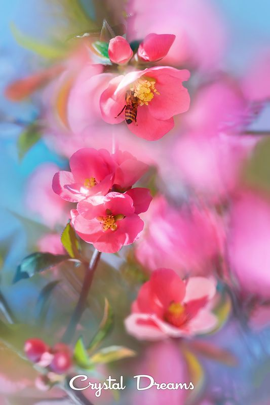 crystal dreams, macro, spring, color, art, nature, bee \