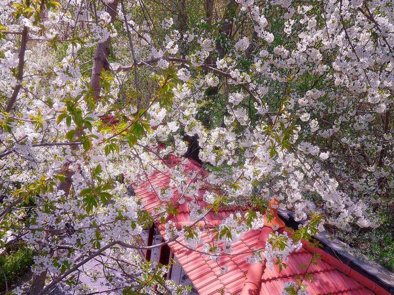иран Цветы Иранаphoto preview