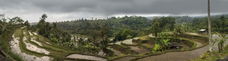 бали, остров, сказка, тропики, экзотика, индонезия Рисовые террасыphoto preview