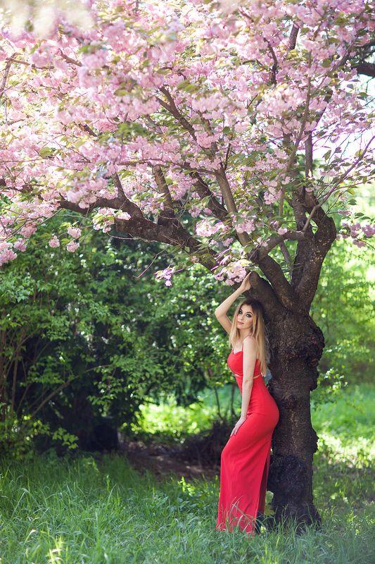 фотосессия, сакура, красота, красное, платье, девушка, макияж, парк, цветы, весна, Симферополь, фотограф, Пекшева Евгенияphoto preview