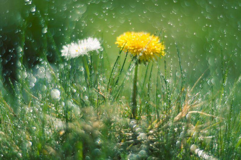 С милым и под дождём райphoto preview