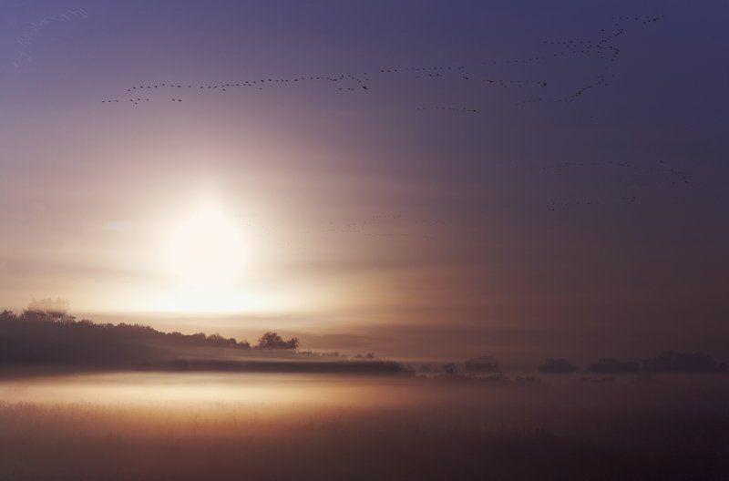утро, рассвет, птицы, перелёт, туман, осень Перелётные птицы.photo preview