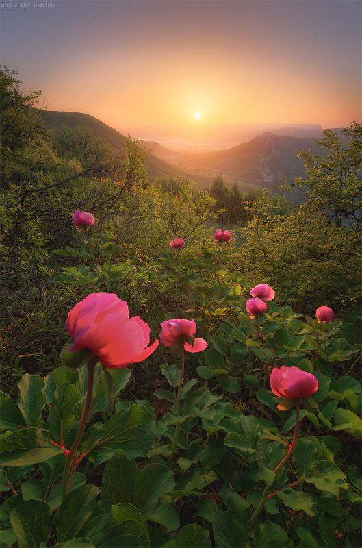 крым, мыс айя, куш-кая, байдарская долина, пейзаж, пионы In The Shadows Of The Forestphoto preview