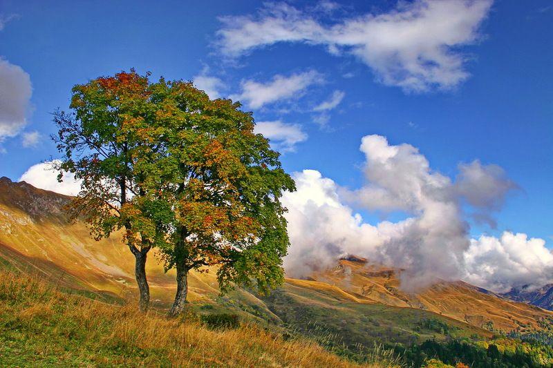 осень горы клёны Клёны.photo preview