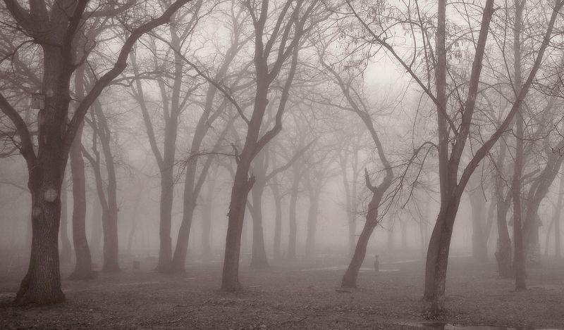 Туманphoto preview