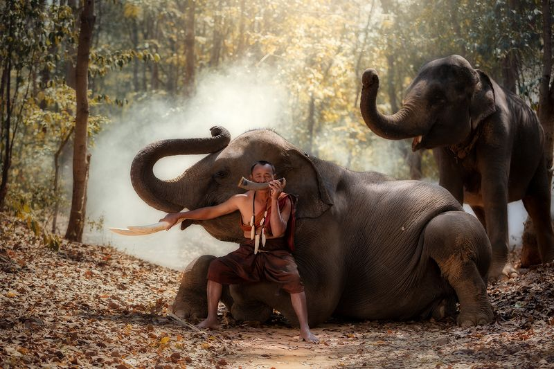 portrait,elephant,friends,man,people,thailand, Song time and friend in wildphoto preview