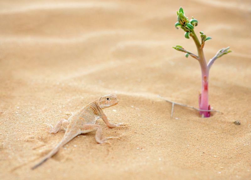 макро, ящерица, калмыкия В поисках оазисаphoto preview