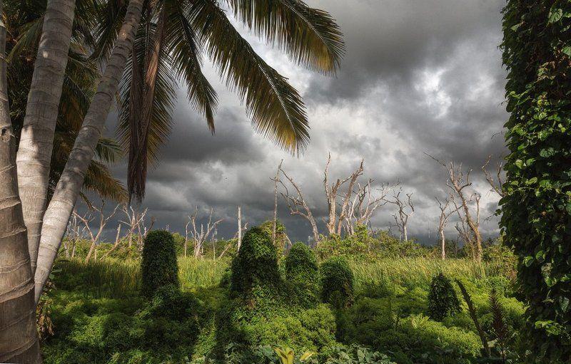Зелень пальмы стволы деревья тучи тропики Доминикана Тропический нейзажphoto preview