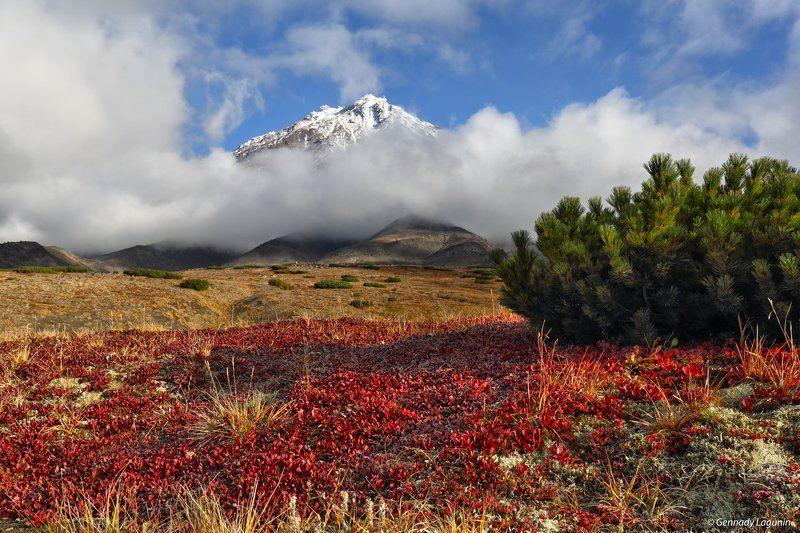 камчатка Там вулканы спят на облакахphoto preview