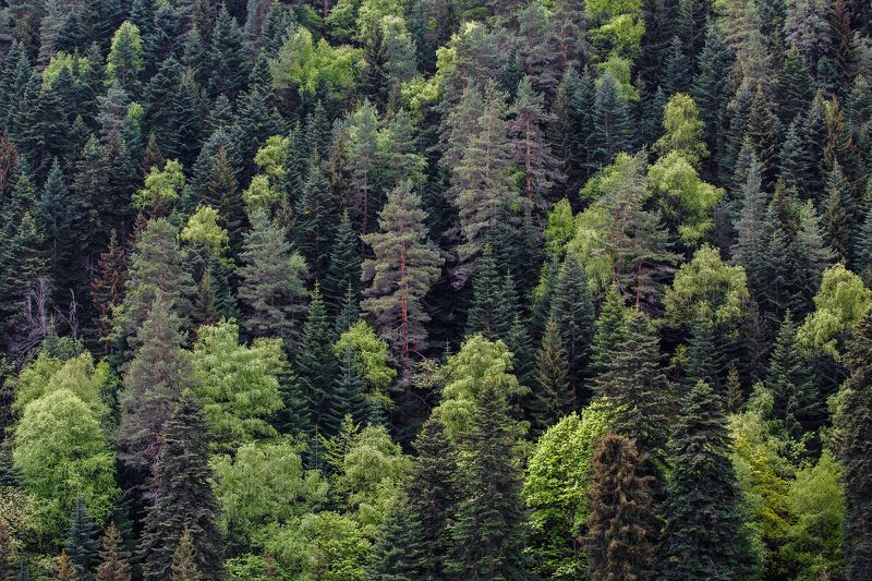 кчр,карачаево-черкесия,горы ,теберда,лес,тебердинский заповедник Горы,Лес,Теберда ...photo preview