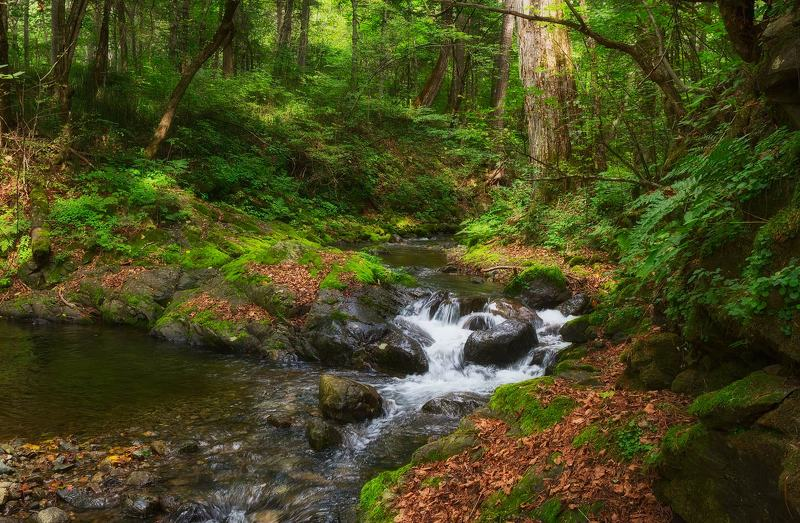 тайга, ручей, приморский край, лето таёжный ручейphoto preview