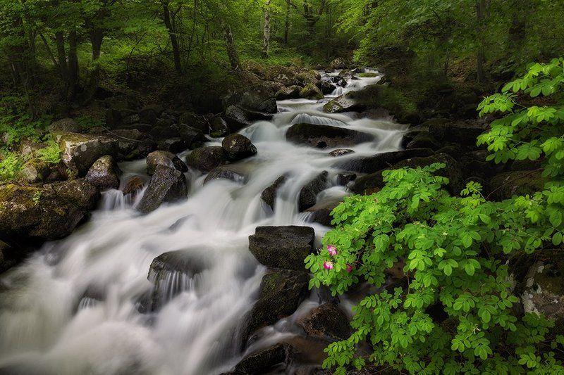 река Владайскаphoto preview