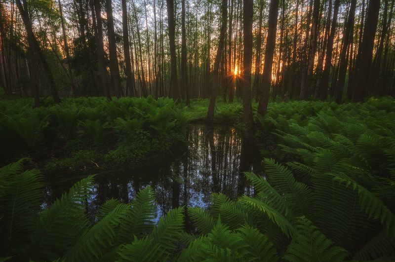россия, подмосковье, лето, лес, папоротник, речка, деревья, солнце, свет, лучи, небо В подмосковных джунгляхphoto preview