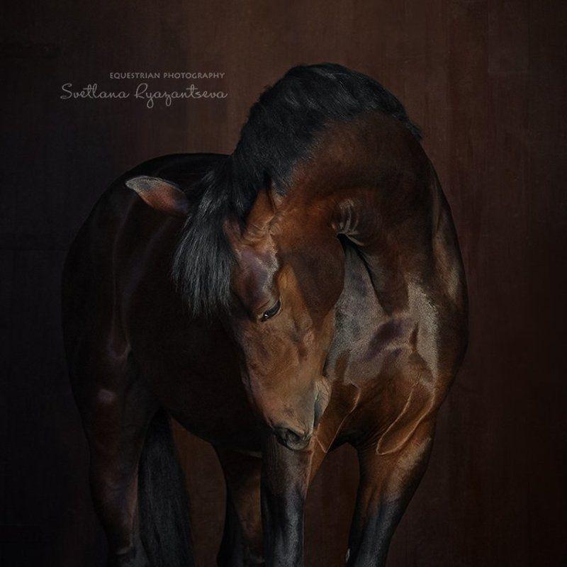 horse, portrait, портрет, лошадь, лошади Кембриджphoto preview