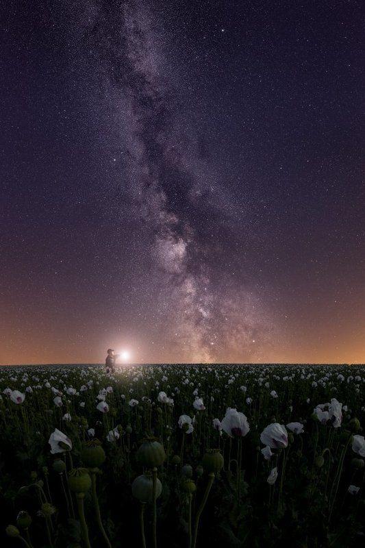 astro, galaxy, milky way, milkyway, stars, poppy Starry poppy..photo preview