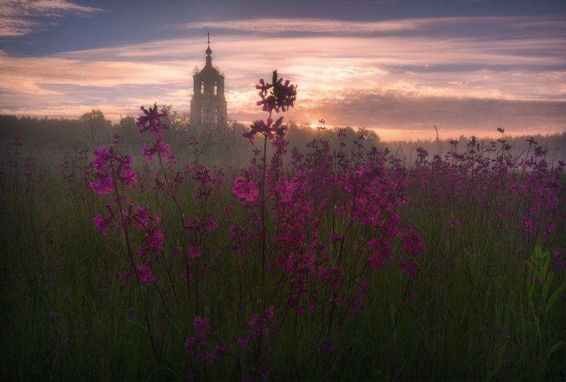 пейзаж, пейзажная съемка, утро, туман, храм, июнь, июньское утро, свежесть, молодая зелень, никон, landscape, may, fog, morning, church Летние цветыphoto preview