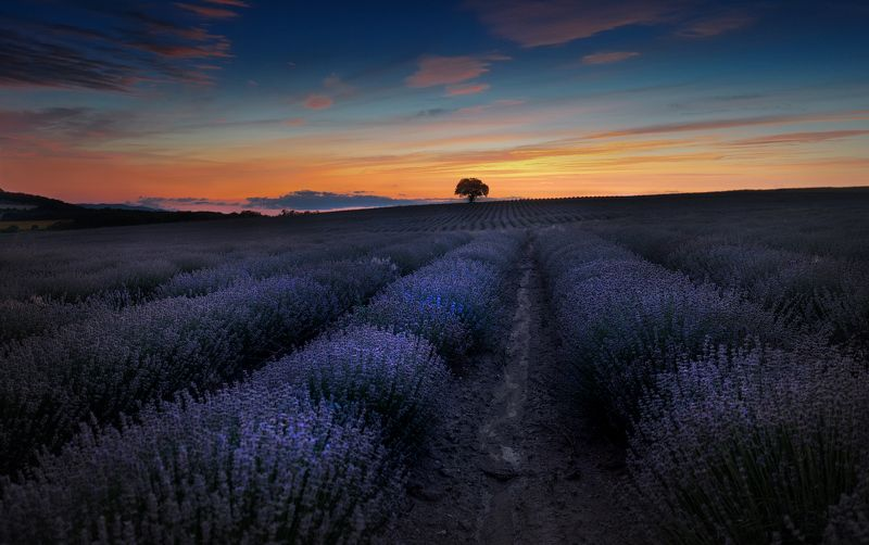 lavender, bulgaria, landscape, fields Lavender fileds in Provence, Bulgariaphoto preview