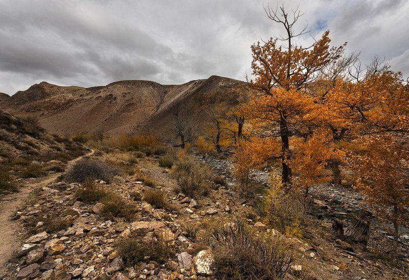 Осени янтарьphoto preview