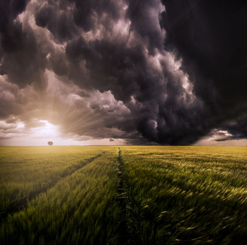 lithuania, storm, clouds, tree, field, grass, sun, sunset *photo preview