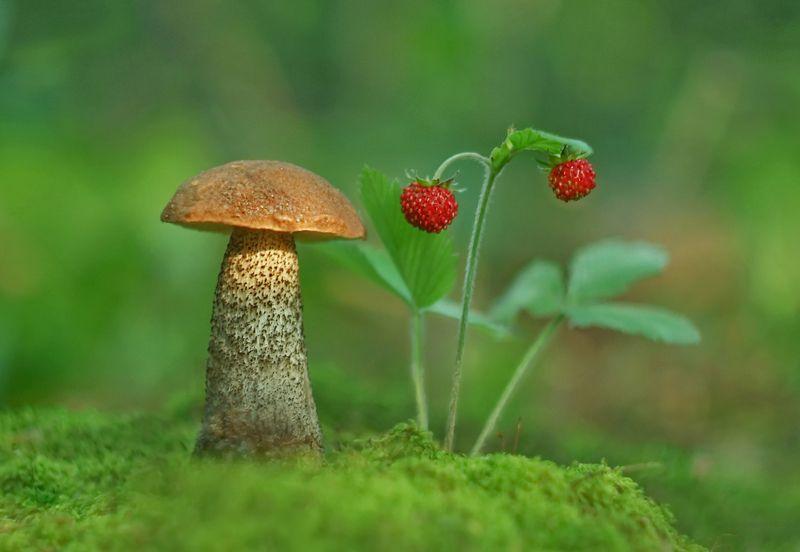 грибы, природа, макро Грибы да ягоды...photo preview