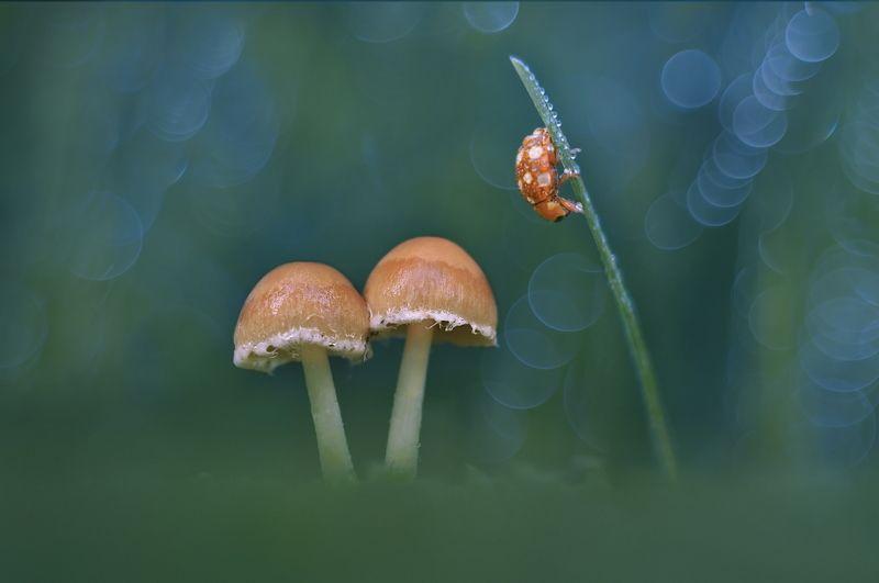 грибы, природа, макро Удивительный макромирphoto preview