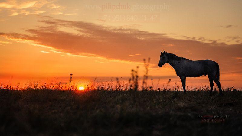 лошадь, пейзаж, восход солнца, в поле лошадь ...И рассветphoto preview