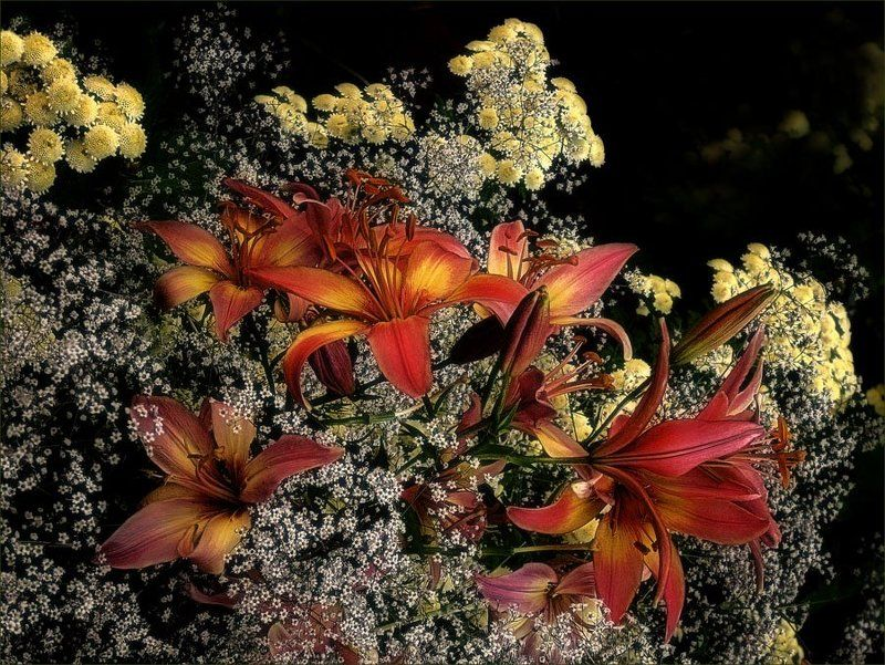 цветы, флора, лилии ...photo preview