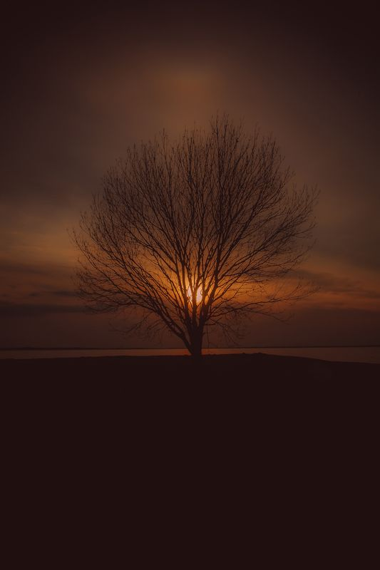 латвия саласпилс природа закат цвет  Покой.photo preview