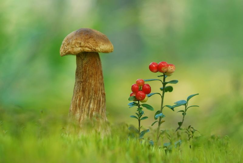 грибы, природа, макро Боровикиphoto preview