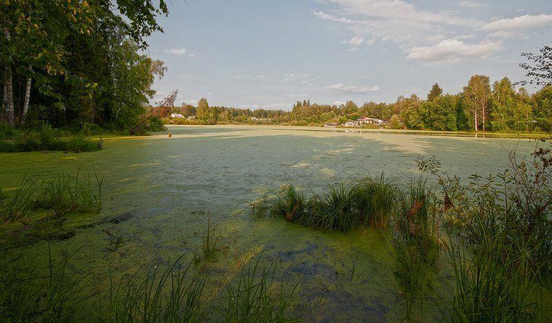 пруд, лето, тина, вода, лес, природа, пейзаж В поисках золотого ключика...photo preview