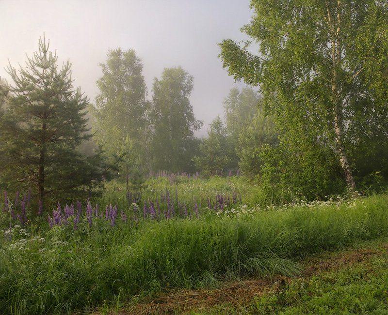 утро июль туман Утро. Июльphoto preview