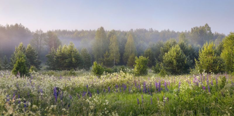 июль утро разнотравье туман Цветущий июльphoto preview
