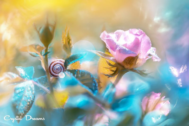 crystal dreams, macro, summer, color, art, nature, flowers, snail \
