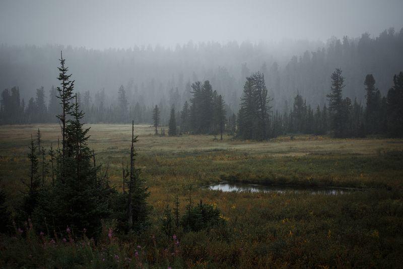 осень, август, пейзаж, саяны, утро, туман, деревья, красиво, мистика, путешествие, exployer, hiking, сибирь, россия Дыхание осениphoto preview