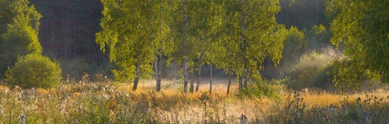 утро лес контажур Когда солнце встает над лесомphoto preview