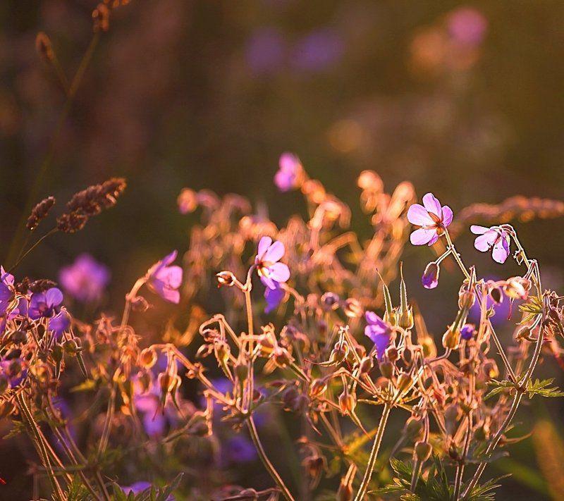 лето, summer, flowers, цветы Meadow flowersphoto preview