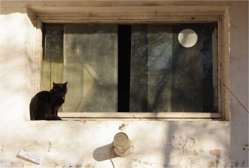кошка Про фонарь, кошку и луну в окошкеphoto preview