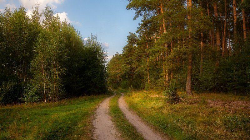 В августе на лесной опушкеphoto preview