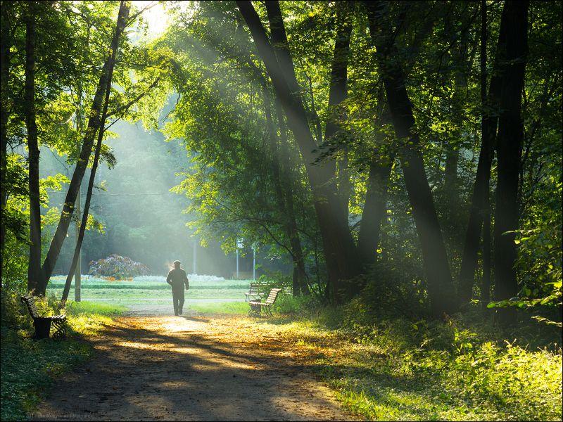 город, парк, Москва, Кузьминки, Выхино, Двенадцати, Лучей, утро, свет, тропинка Россия. Москва. Парк \