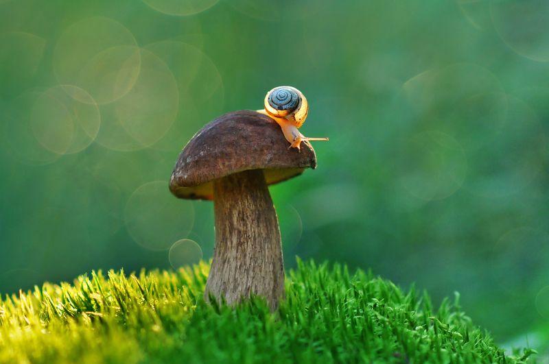грибы, природа, макро, улитка Спешила улитка домой...photo preview