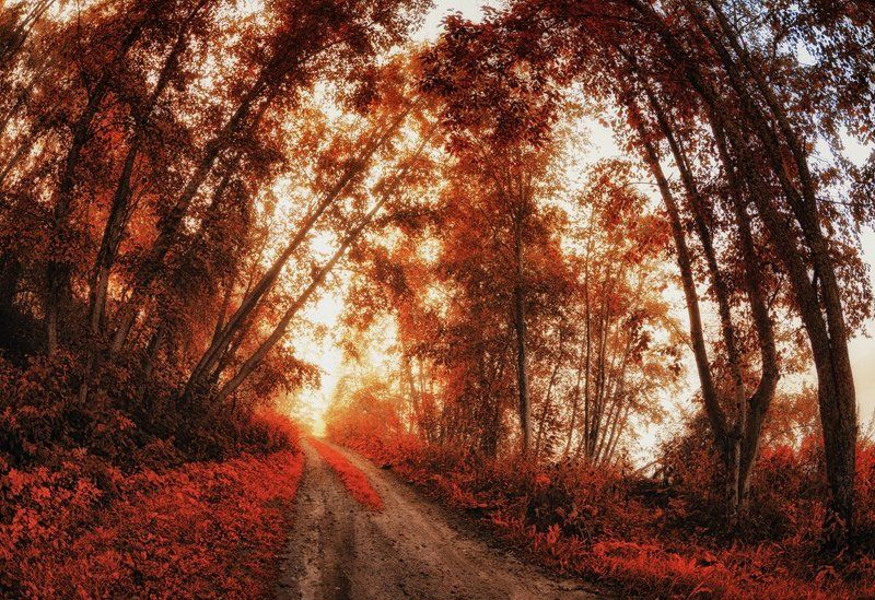осень,сон,природа,деревья,свет,пейзаж Мне снился сон,осенний сон...photo preview