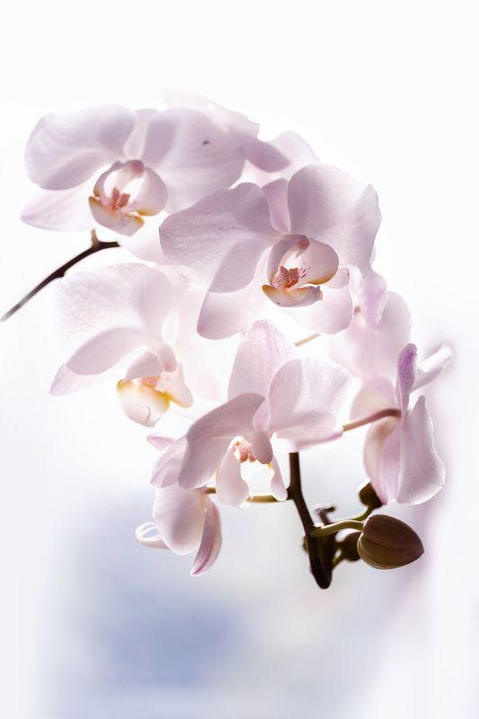 Воздушные орхидеиphoto preview