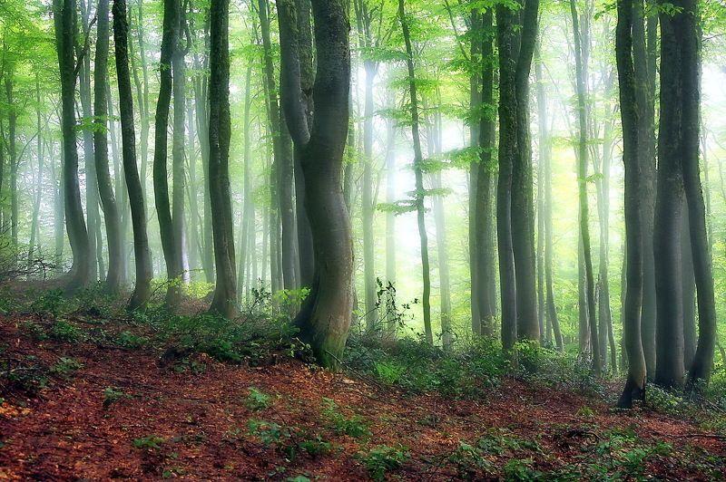 лес туман горы. Буковый лес*photo preview