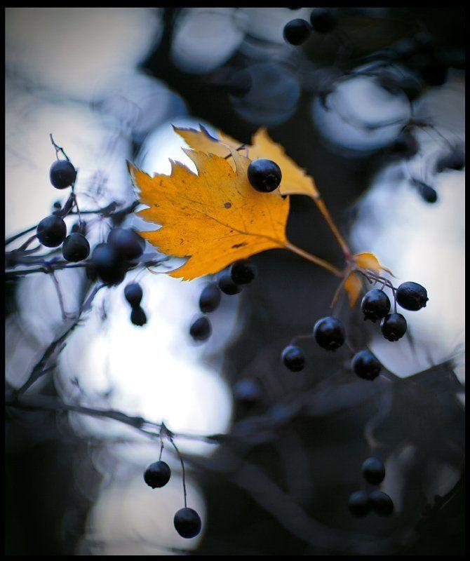 осень , боке Осенние ноткиphoto preview