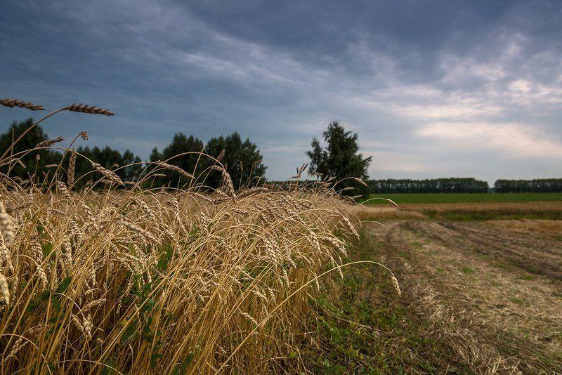 осень, урожай Страда...photo preview
