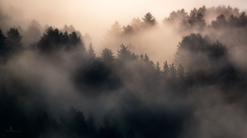 туман, пейзаж, Тушети, Грузия, горы, лес, восход Огненный восходphoto preview