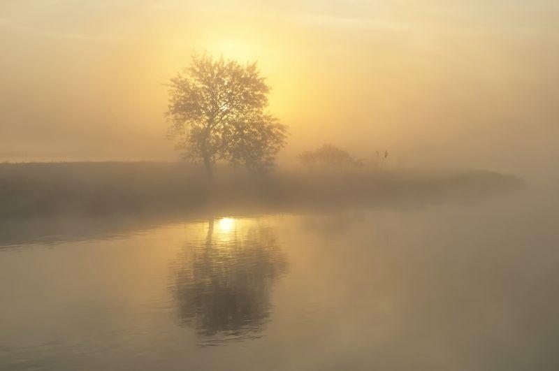 утро, туман, солнце, свислочь На рассветеphoto preview