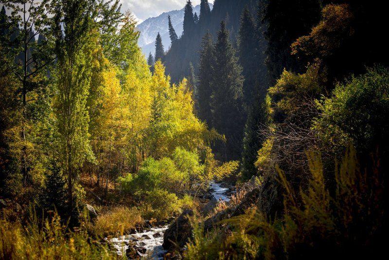 казахстан, горы, заилийский алатау, тянь-шань, ледник, озеро, морена, осень, Осень в северном Тянь-Шанеphoto preview