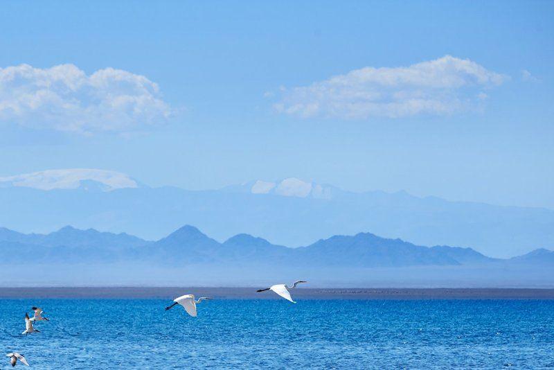 Монголия, озеро, птицы Смятение и покойphoto preview