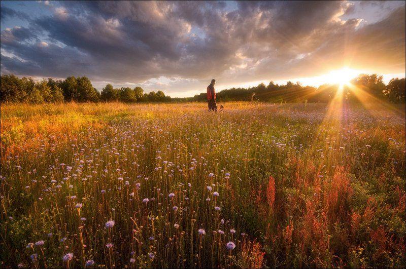 россия, подмосковье, лето, вечер, закат, солнце, свет, поле, цветы, лучи, небо, облака, деревья Провожая деньphoto preview